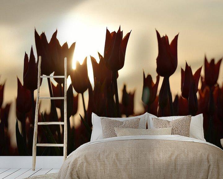 Beispiel fototapete: Orange Tulpen an einem schönen sonnigen Tag von Jeffry Clemens