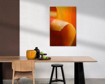 Oranje tulp von Ada Zyborowicz