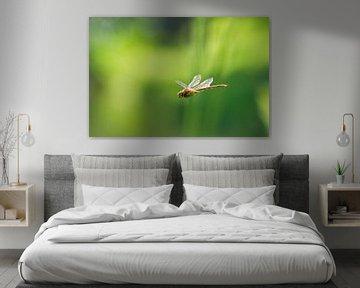 Vliegende Libel van Dennis van de Water