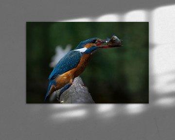 Ijsvogel van Rando Kromkamp
