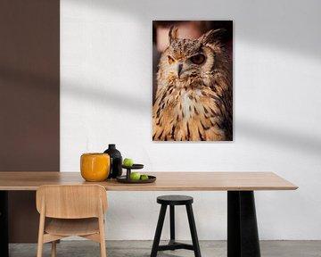 Owl.(uil)