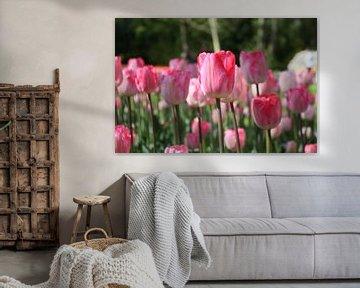 aufrecht stehen, niederländische Tulpen von de buurtfotograaf Leontien
