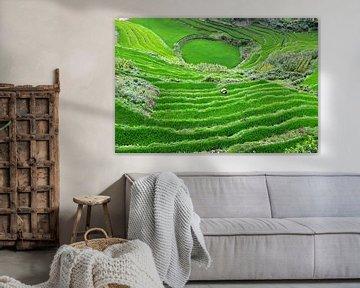 Rijstveld Vietnam van Maurice Ultee