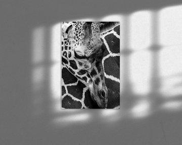 Giraffe von Robert Loomans