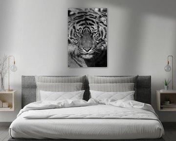 Tiger von Robert Loomans