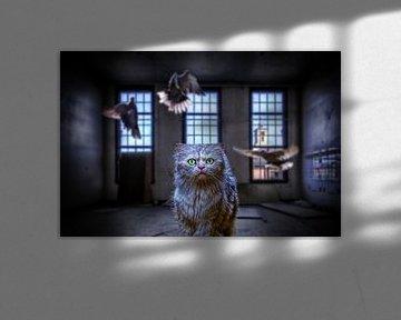 Cat van Juliën van de Hoef