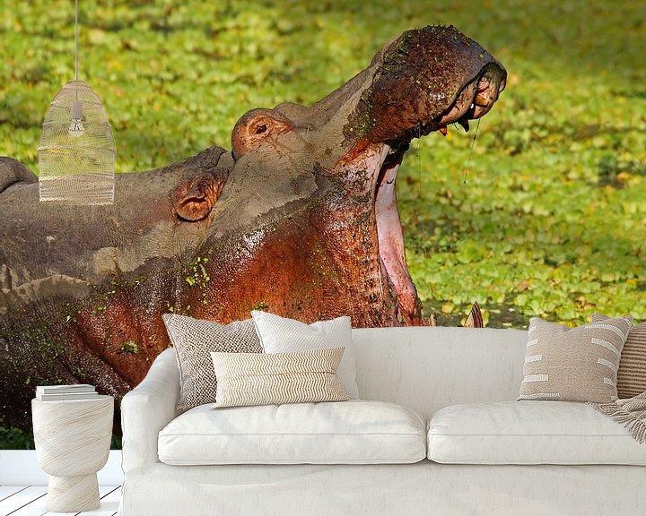 Sfeerimpressie behang: The Hippo-Boss - Africa wildlife van W. Woyke