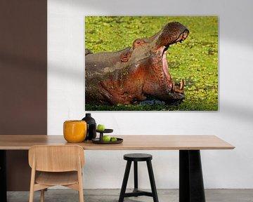 The Hippo-Boss - Africa wildlife van W. Woyke