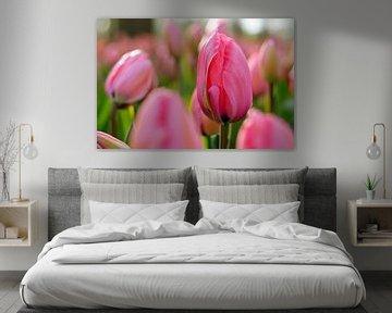 A Pink Dream von Corina de Kiviet