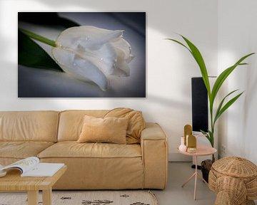 Witte tulp van Saskia Cloo-Hartsema