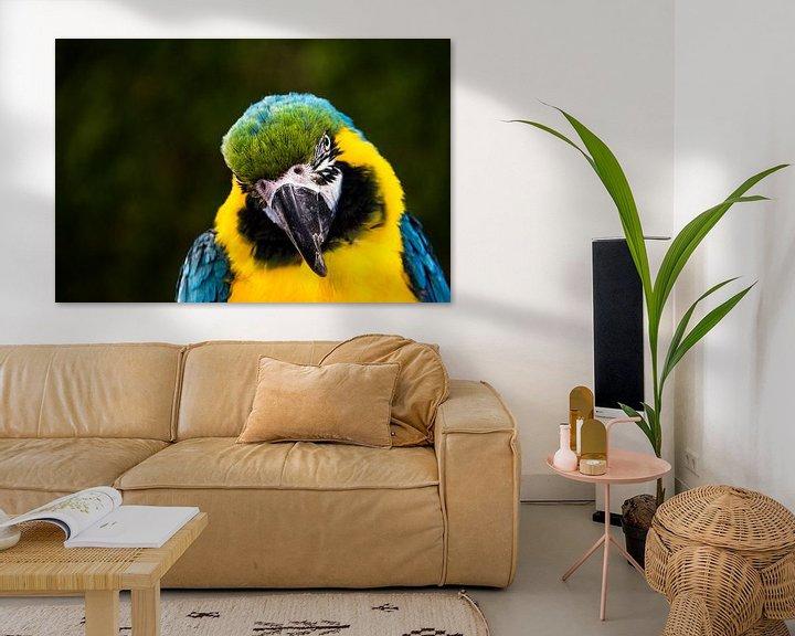 Sfeerimpressie: Papegaai of blauw gele ara. van Ton de Koning