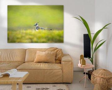 Weidevogel van Sander Meertins