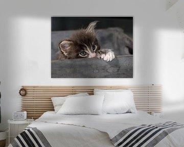 Kitten serie II