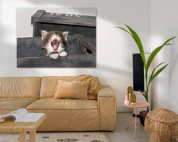 Kitten serie IV von Rob Smit