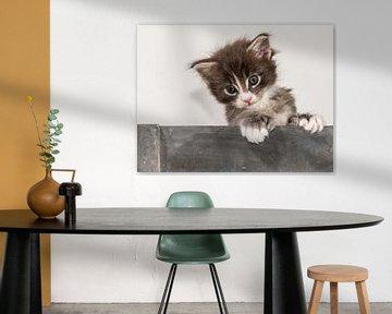 Kitten serie VI von Rob Smit