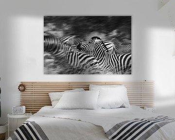 Zebra's running von Jojanneke Vos