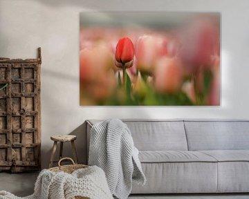 Tulpen van Erik Busstra