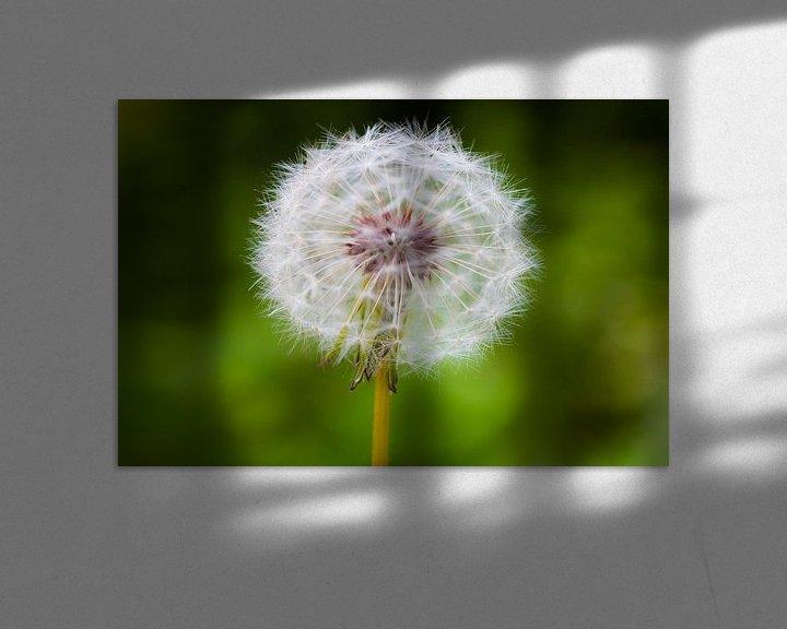 Sfeerimpressie: Dandelion 'SeeThru'   van William Mevissen