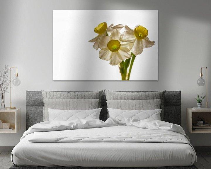 Sfeerimpressie: Narcissus 'Minnow' van William Mevissen