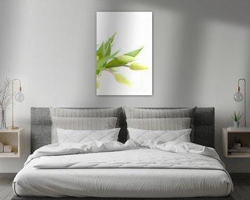 Gele frisse tulpen in vaas op witte achtergrond van Studio Windtkracht