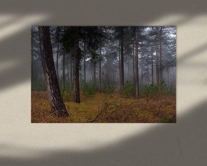 Sfeerimpressie: Foggy Forest van William Mevissen