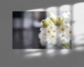 Witte bloemen in de vensterbank van Charlotte Meindersma