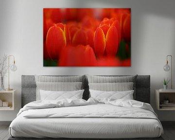 Tulipa World's Favorite van Albert van Dijk