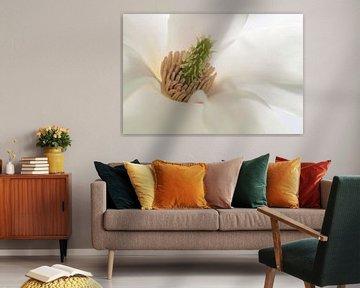Magnolia hart  van Yvon van der Wijk