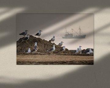 Zeemeeuwen met vissersbootje van Dick van Duijn