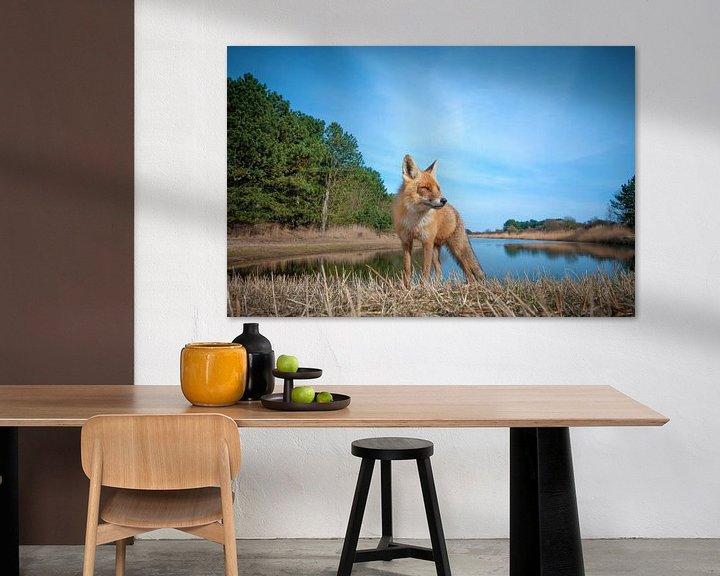 Sfeerimpressie: Nieuwsgierige vos van Lex Scholten