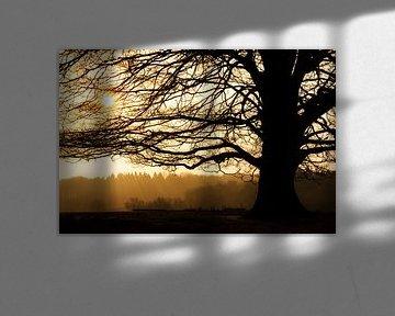 Posbank silhouette van Dennis van de Water