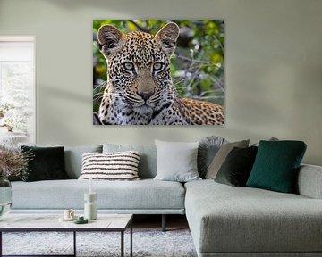 The Leopard - Africa wildlife van W. Woyke