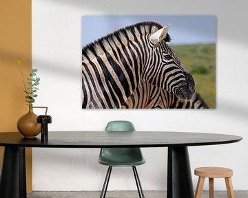 Zebra in - Afrika wildlife van W. Woyke