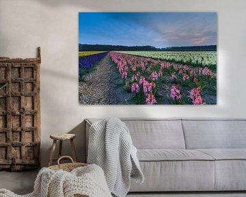 Kleurrijk bloemenveld in de bollenstreek sur Marcel Tuit
