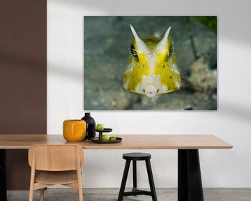 Thornback cowfish van Jan van Kemenade