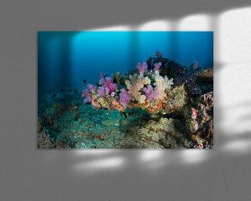 Rif met kleurrijke softkoralen van Jan van Kemenade