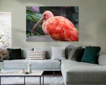 vogel van stefany vangeel