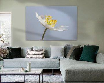 Bosanemoon in bloei van Karla Leeftink