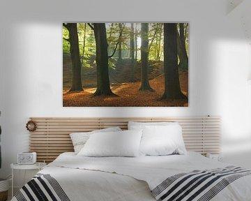 Herfst in het bos van Michel van Kooten