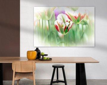 Soft Focus Tulp van Jeffry J.J van Berkum