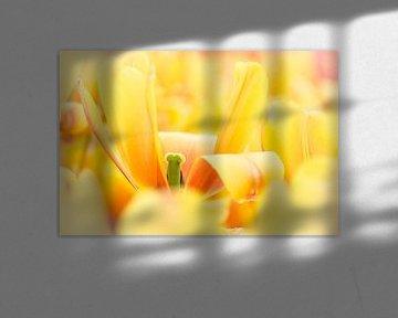 Gele tulp van Jeffry J.J van Berkum