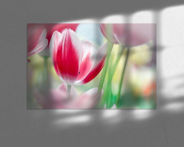 Sfeerimpressie: Rood/Witte Tulp van Jeffry J.J van Berkum