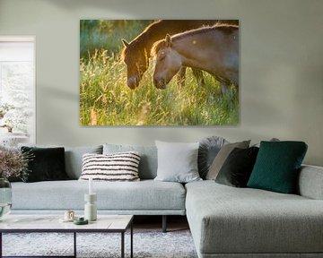 Twee lieve paarden van Bastiaan Schuit