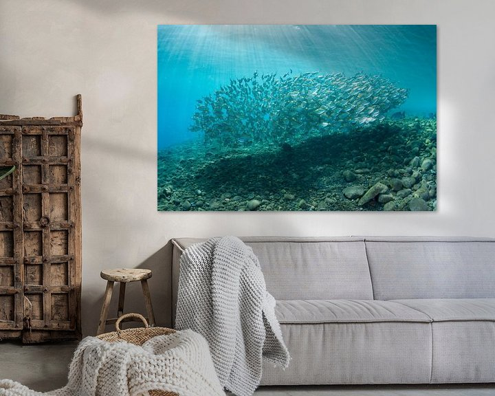 Sfeerimpressie: School vissen van Jan van Kemenade