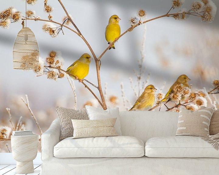 Beispiel fototapete: Vögel | Grünfink im Schnee von Servan Ott
