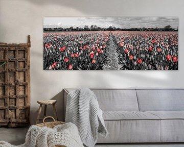 Tulpen 2015 - 004 van Alex Hiemstra