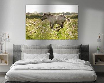 Paard | Rennend konikpaard 2 - Oostvaardersplassen van Servan Ott