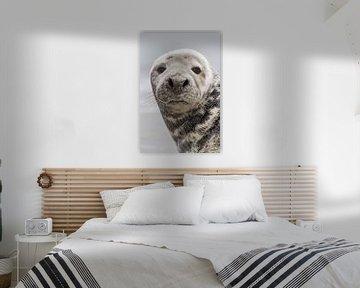 Natuur | Zeehond portret Helgoland van Servan Ott