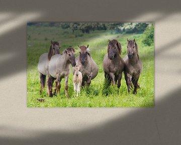 Pferden mit fohlen -  Oostvaardersplassen von Servan Ott