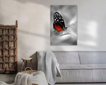 Passievlinder van Violetta Honkisz
